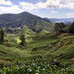 Another view from Sungei Palas tea Plantation
