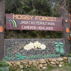 pintu masuk mossy forest